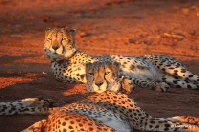 Wildlife in Madikwe Game Reserve, South Africa